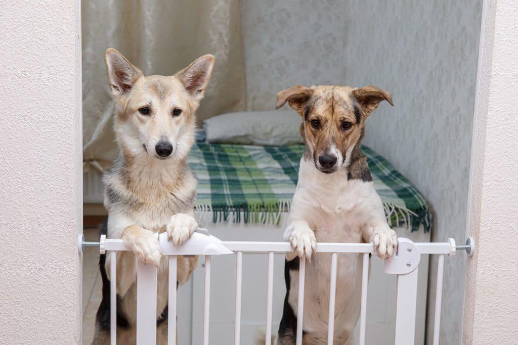 O portão é um dos acessórios para cachorro mais importante para casas