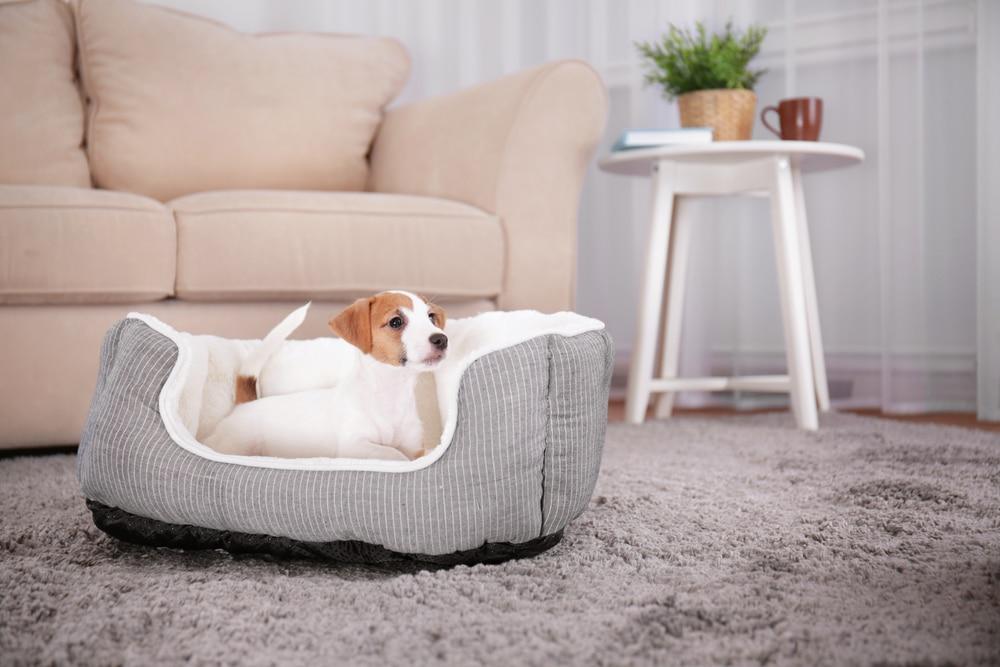 A caminha para cachorro pode ter vários tamanhos e formatos, mas deve priorizar o conforto do animal